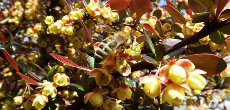Propolis The Healing Gift from the Bees