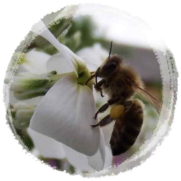 Great Benefits of Honey for Humans