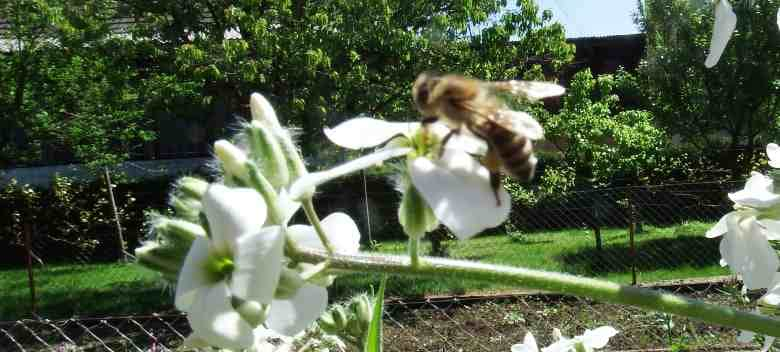 Why You Should Use Bee Products Every Day