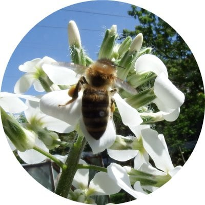 Why You Should Use Bee Products Every Day2