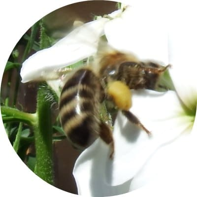 Why You Should Use Bee Products Every Day3