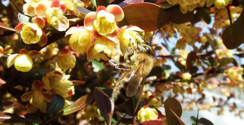 Why You Should Use Bee Products Every Day8